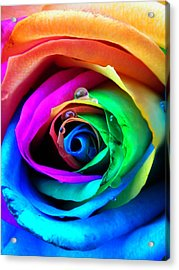 Rainbow Rose Acrylic Print by Juergen Weiss