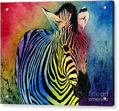 Rainbow Zebra Acrylic Print by Hailey E Herrera