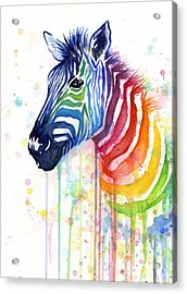 Rainbow Zebra - Ode To Fruit Stripes Acrylic Print by Olga Shvartsur
