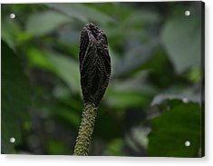 Rainforest Pod Acrylic Print by Bill Mock