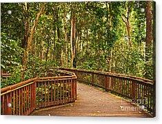 Rainforest Walkway Acrylic Print by Bob and Nancy Kendrick