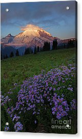 Aster Acrylic Print featuring the photograph Rainier Morning Cap by Mike  Dawson