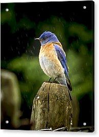 Raining Acrylic Print by Jean Noren