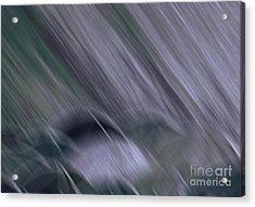 Rainy By Jrr Acrylic Print by First Star Art