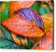Rainy Day Leaves Acrylic Print by Rona Black