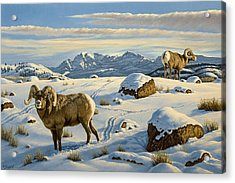 Rams Down From Junction Butte Acrylic Print by Paul Krapf