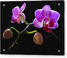 Rare Beauty Acrylic Print by Juergen Roth