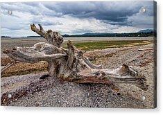 Rathtrevor Beach Stump Acrylic Print by James Wheeler