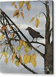 Raven In Birch Acrylic Print by Carolyn Doe