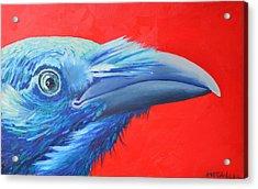 Raven Portrait Acrylic Print by Ana Maria Edulescu