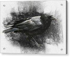 Raven Acrylic Print by Taylan Soyturk
