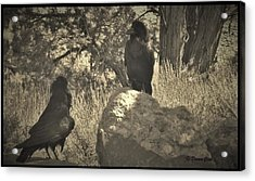 Raven's Squawk Acrylic Print by Donna Cook
