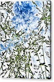 Reach To The Sky Acrylic Print by Marianna Mills