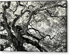Reaching For Heaven Acrylic Print by Karen Wiles