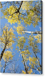 Reaching For The Sky 1 Acrylic Print by Rob Huntley