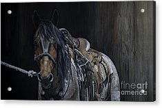 Ready And Willing Acrylic Print by Joni Beinborn
