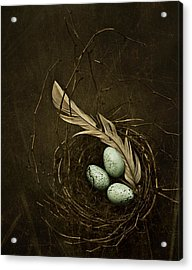 Rebirth Acrylic Print by Amy Weiss