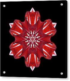 Red And White Amaryllis Vii Flower Mandala Acrylic Print by David J Bookbinder