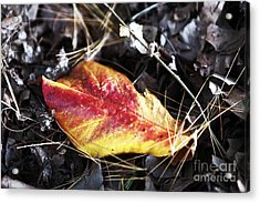 Red And Yellow Acrylic Print by John Rizzuto