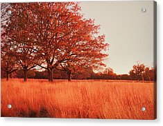 Red Autumn Acrylic Print by Violet Gray