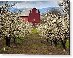 Red Barn Spring Acrylic Print by Mike  Dawson
