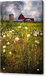 Red Barns In The Wildflowers Acrylic Print by Debra and Dave Vanderlaan