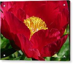 Red Beauty Acrylic Print by Avis  Noelle