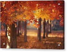 Red Canopy Acrylic Print by Magda  Bognar