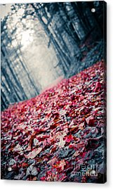 Red Carpet Acrylic Print by Edward Fielding
