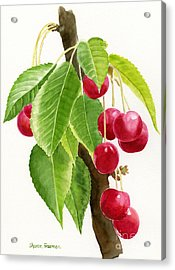 Red Cherries On A Branch Acrylic Print by Sharon Freeman