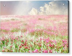 A Perfect World Acrylic Print by Amy Tyler