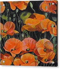 Red Corn Poppies Acrylic Print by Melissa Torres