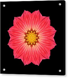 Red Dahlia Hybrid I Flower Mandala Acrylic Print by David J Bookbinder