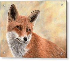 Red Fox Painting Acrylic Print by Rachel Stribbling