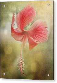 Red Hibiscus Acrylic Print by David and Carol Kelly