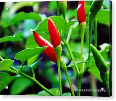 Red Hot.. Chillis Acrylic Print by Ibrahim Mat Nor