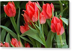 Red Ladies Acrylic Print by Kathleen Struckle