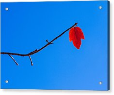 Red Leaf - Arboretum - Madison Acrylic Print by Steven Ralser