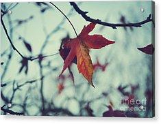 Red Leaf Acrylic Print by Jelena Jovanovic
