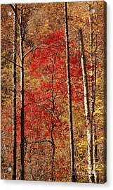 Red Leaves Acrylic Print by Patrick Shupert