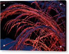 Red Light In Snow-heavy Grass Acrylic Print by Mick Anderson