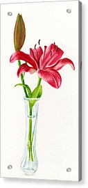 Red Lily In A Vase Acrylic Print by Sharon Freeman