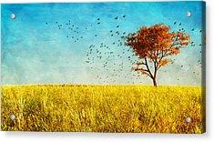 Red Maple Acrylic Print by Bob Orsillo