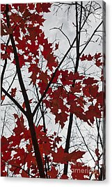 Red Maple Branches Acrylic Print by Ana V  Ramirez