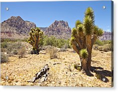Red Rock Canyon Cactus Trees Nevada. Acrylic Print by Gino Rigucci