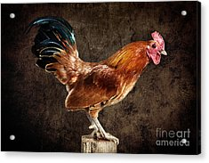 Red Rooster On Fence Post Acrylic Print by Cindy Singleton