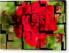 Red Rose Puzzle Acrylic Print by Julia Fine Art And Photography
