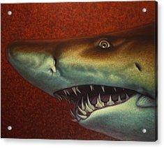 Red Sea Shark Acrylic Print by James W Johnson