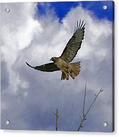 Red Tail Hawk Digital Freehand Painting 1 Acrylic Print by Ernie Echols