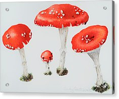 Red Toadstools Fly Agaric  Acrylic Print by Sally Crosthwaite